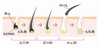 人間の毛も季節で生え変わる!?秋に増える抜け毛対策